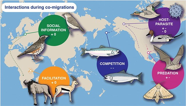 Migration Interactions