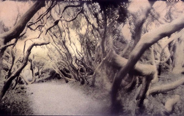 Hand-tinted Holga 120-S in-camera collage darkroom photographs by artist Alison Overton