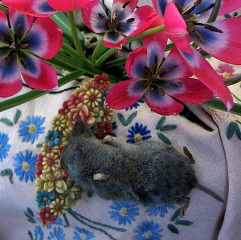 Staged digital color photographs of animals, plants and things by artist Alison Overton