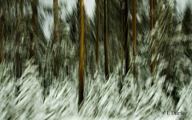 Blurry Trees #1