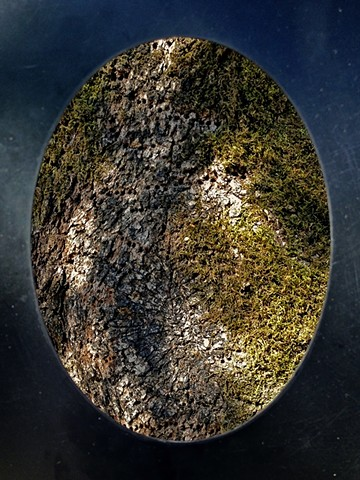 vignette, oval, eye of the beholder, specimen, iPhoneography, alternative photography, conceptual art