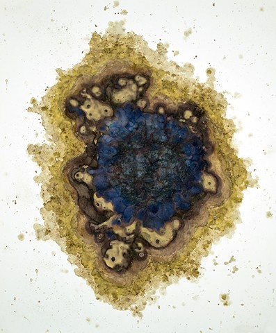 allelopathy, alchemy, talisman, natural pigments, plant pigments, bio art, conceptual art, abstract art, cyanotype, vandyke