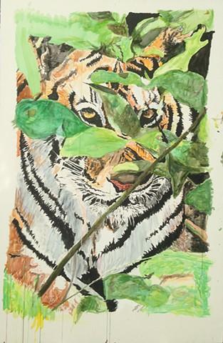 Tiger Bandhavgarh