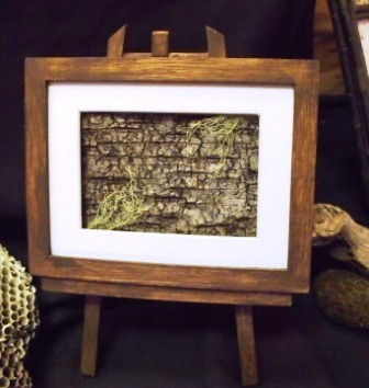 Framed Birch Bark