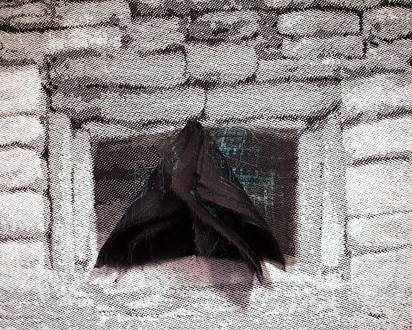 El Tahin: Codex of Shadows detail
