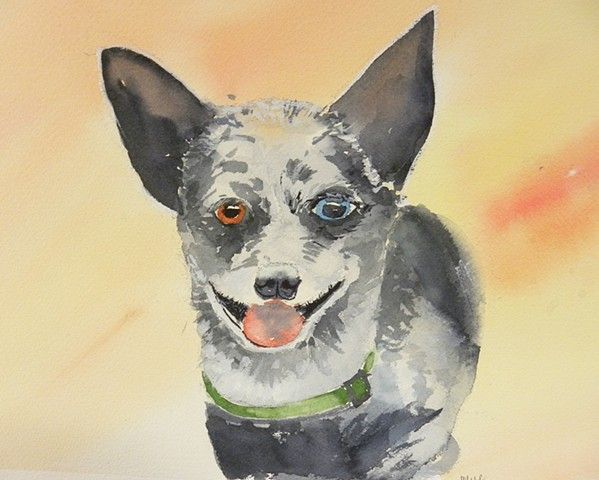 Cattle dog mix