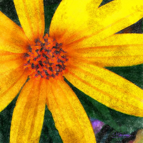 Grow Colours Collection Yellow Star 1
