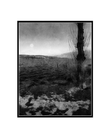 Trees, Digital Fine Art Photograph in color and black & white prints