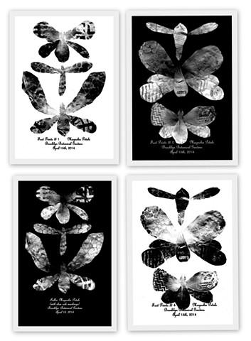 FOOT PRINTS - MAGNOLIA PETALS Brooklyn Botanical Gardens April 15th, 2014