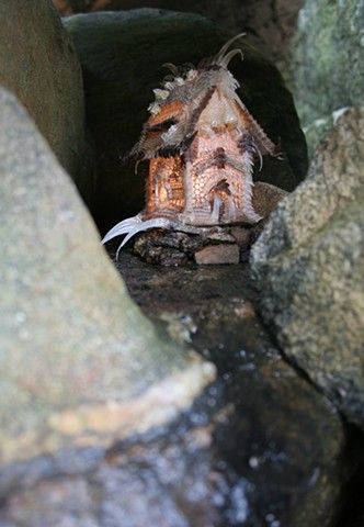 9th LIZARD SHED     Photo Series
