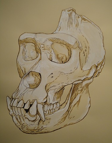 Cross River Gorilla Skull (from the Apologies to the Future series)