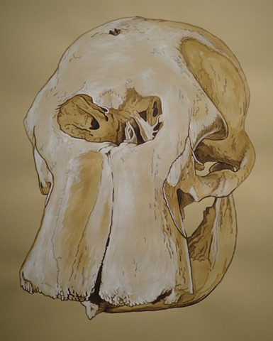 Borneo Pygmy Elephant Skull (from the Apologies to the Future series)