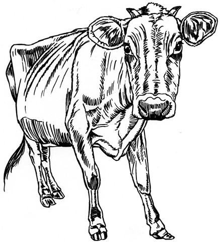 Bony cow (study)