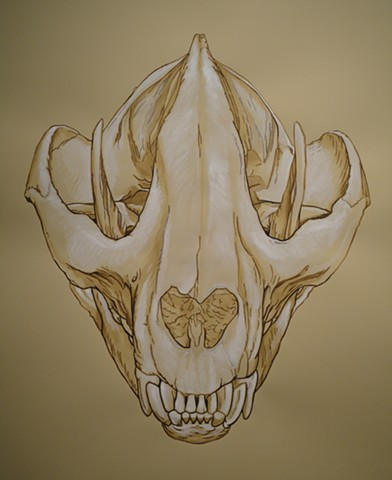 Giant Panda Skull (from the Apologies to the Future series)