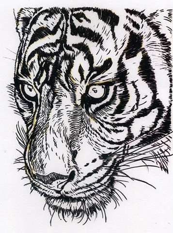 Sumatran Tiger, preparatory drawing