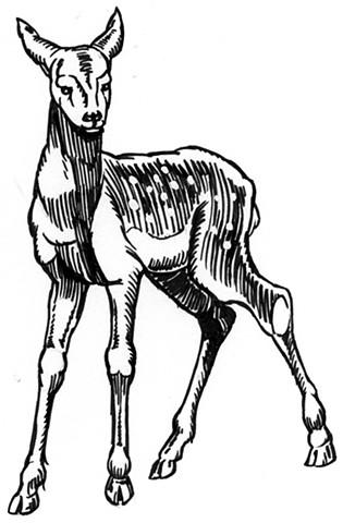 Bambi (study)