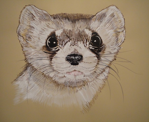 Black-Footed Ferret (from the Apologies to the Future series)