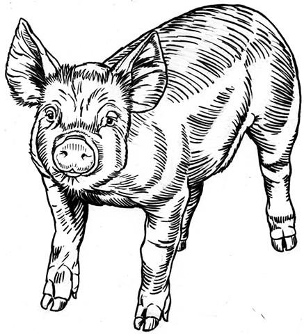 Piglet (study)