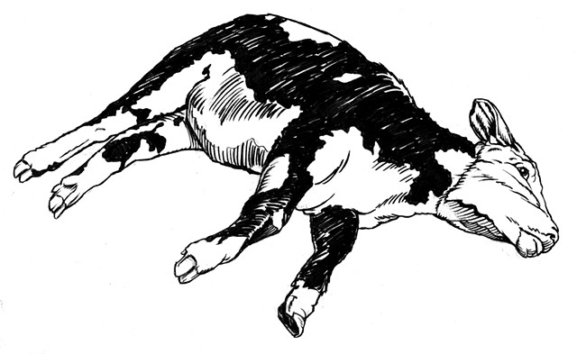 Dead cow (study)