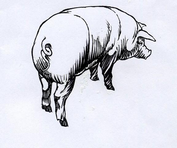 Pig (study)