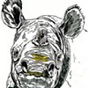 Javan Rhino, preparatory drawing