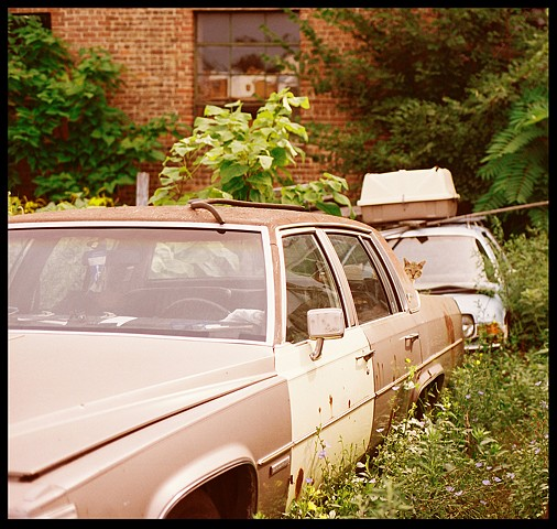 Junkyard, Chicago, Cat, stray, Car