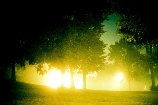 Humbolt Park, Fog, Trees, Chicago