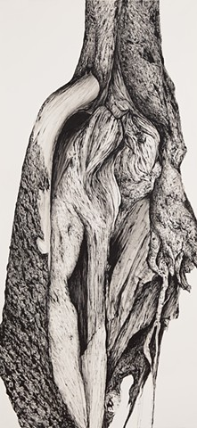 Tree No.17, Litchfield