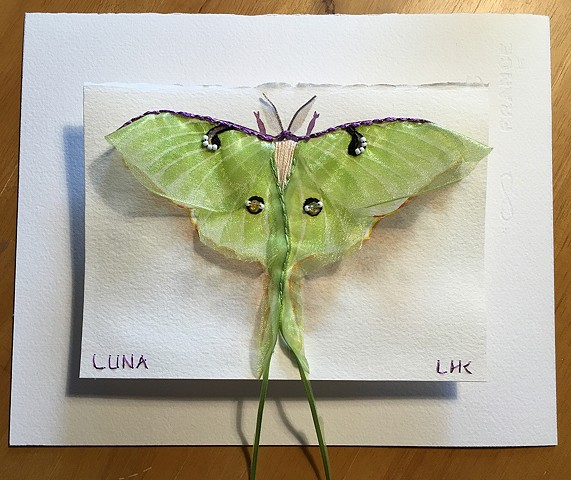 Shadow Luna Moth