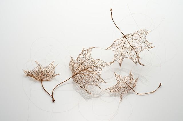 hair leaf
