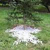 Lacework Arnold Arboretum Boston, Massachusetts