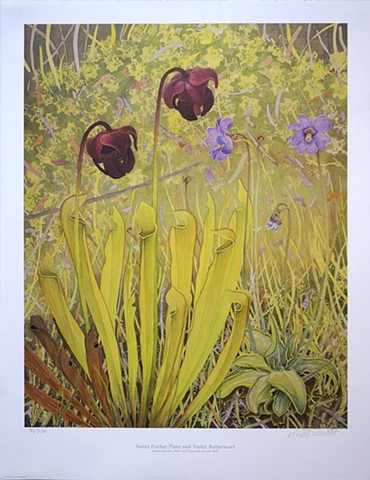 Sweet Pitcher Plant and Violet Butterwort