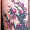 cherry blossom branch coverup