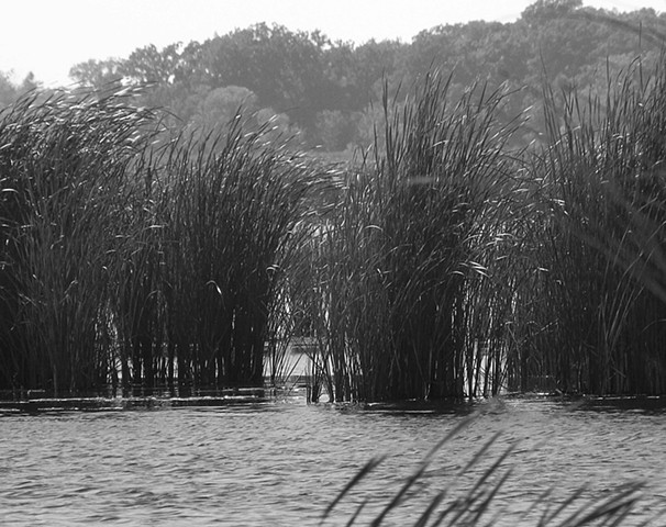 Horicon Reeds
