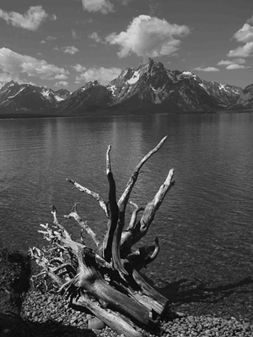 Tetons with Tree Roots