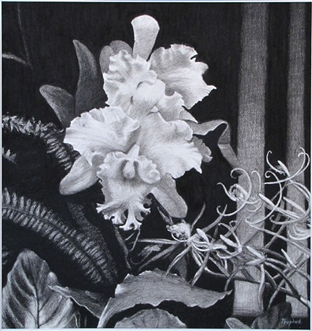 Longwood Orchid Two