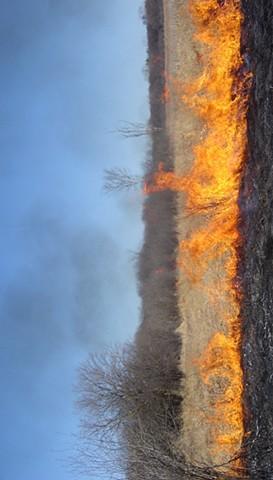 Marsh Fire #1