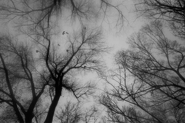 Crow Circle, frame 4 of 4
