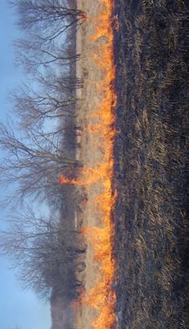 Marsh Fire #2