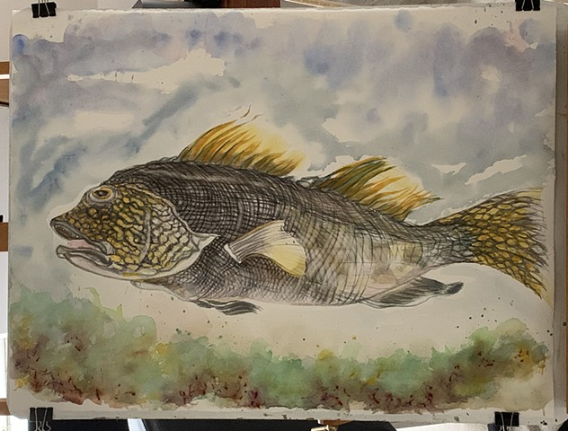 watercolor painting of grouper fish