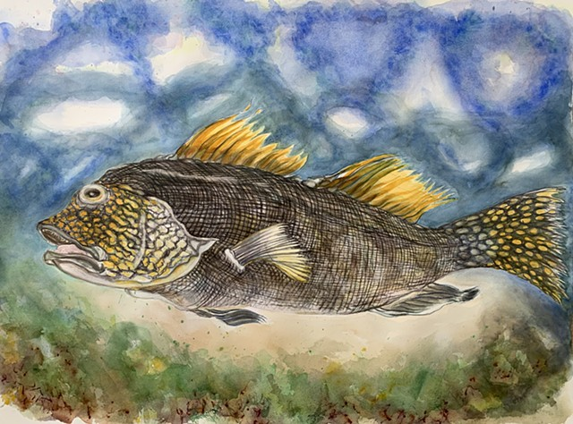 watercolor of yellow Grouper