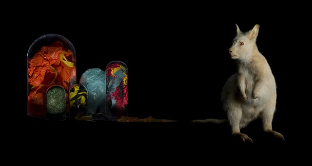 angela casey artist australian photographer still life museum collections