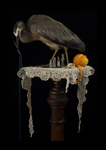 Angela Casey artist photographer surgeon bird still life contemporary art tasmanian gothic australian vanitas