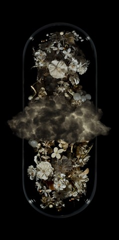 Angela casey artist photography art gallery cloud of unknowing tasmanian gothic still life