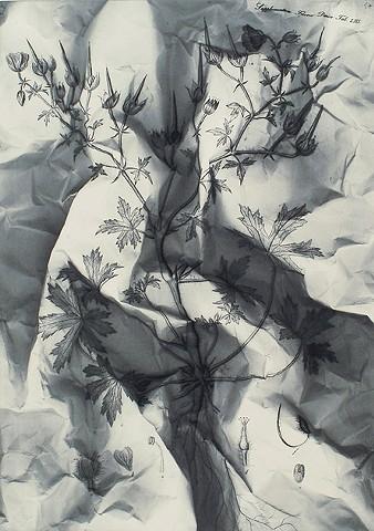 flora danica  niels borch print af marianne grønnow