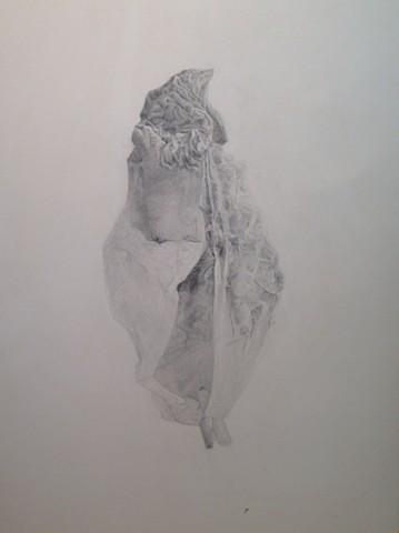 Lauren Pellerito, artist, art, drawing, seed, peach pit, texture, wrinkles, decay