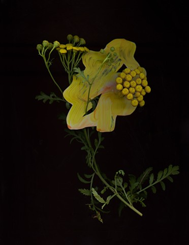 Regan Golden-McNerney, Prairie Constructs, plants scans