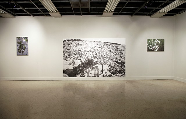 "Installation View: ""Forest Interference,"" ""Fill"" and ""Canopy Gap"""