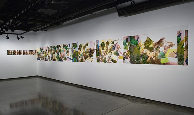 Installation View. Chrono Flora