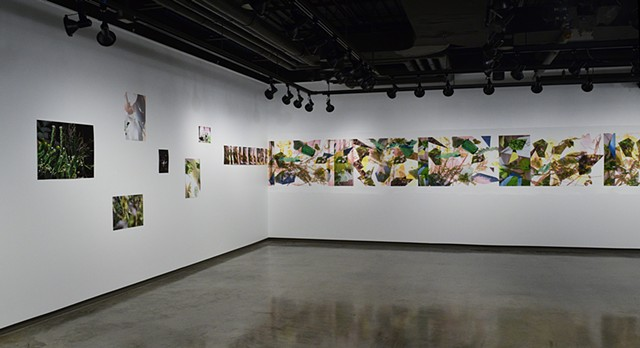Installation View. Chrono Flora, Conkling Gallery.